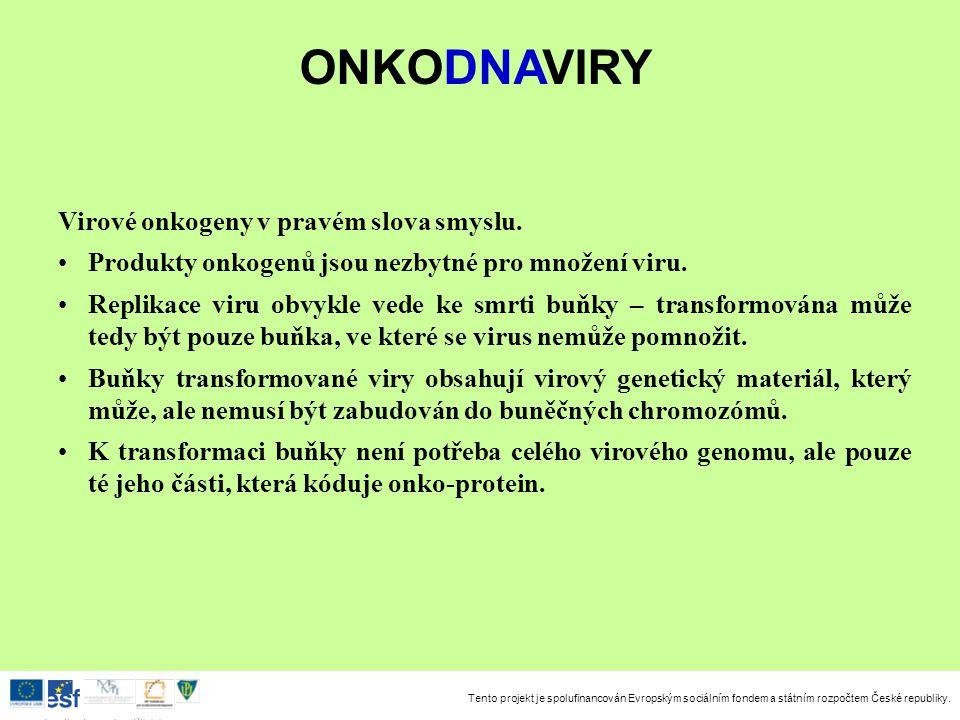Tento projekt je spolufinancován Evropským sociálním fondem a státním rozpočtem České republiky. Investice do rozvoje vzdělávání Virové onkogeny v pra