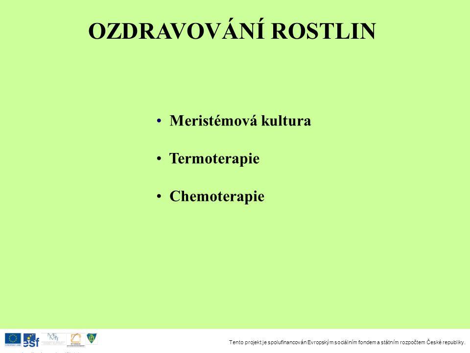 Tento projekt je spolufinancován Evropským sociálním fondem a státním rozpočtem České republiky. Investice do rozvoje vzdělávání OZDRAVOVÁNÍ ROSTLIN M