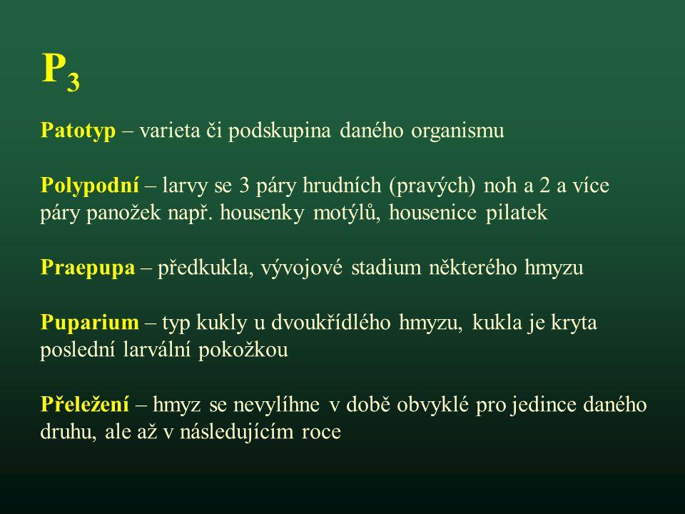 P3P3 Patotyp – varieta či podskupina daného organismu Polypodní – larvy se 3 páry hrudních (pravých) noh a 2 a více páry panožek např. housenky motýlů