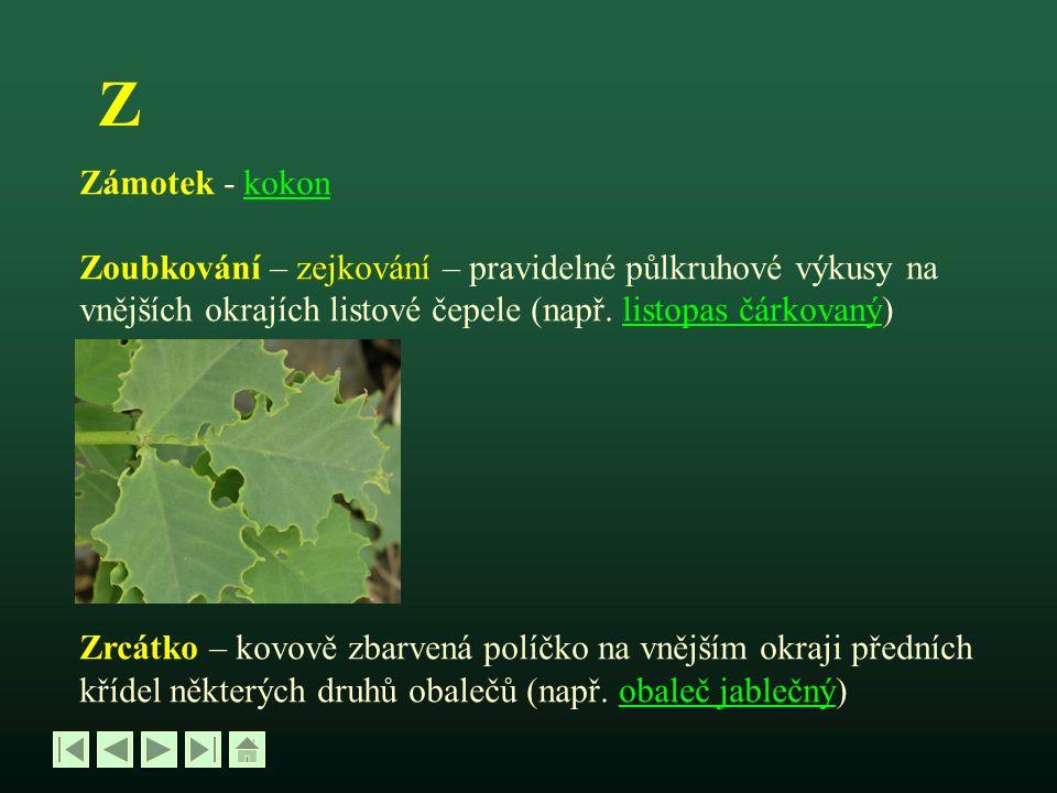 Z Zámotek - kokonkokon Zoubkování – zejkování – pravidelné půlkruhové výkusy na vnějších okrajích listové čepele (např. listopas čárkovaný)listopas čá