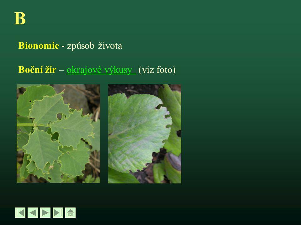 B Bionomie - způsob života Boční žír – okrajové výkusy (viz foto)okrajové výkusy