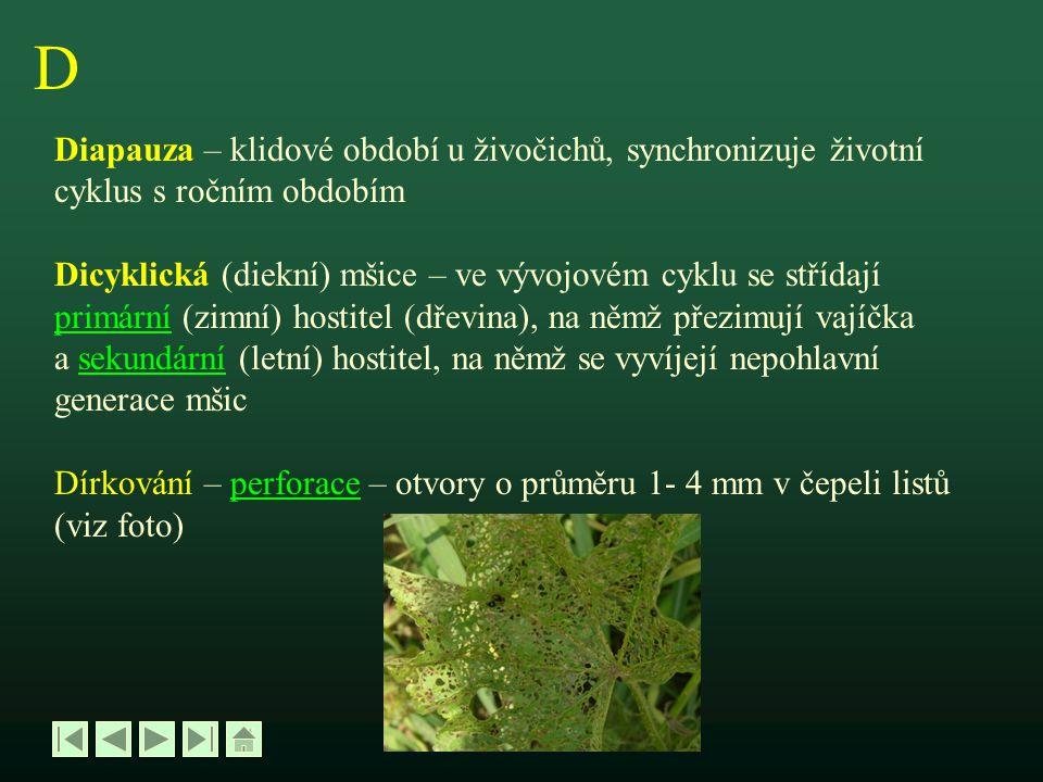 E Eucephalní – apodní larva larva s vyvinutou hlavou Exuvie – svlečka, pokožka odvržená při svlékání (ekdysi) hmyzu