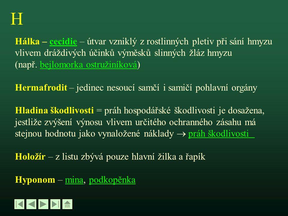 Z Zámotek - kokonkokon Zoubkování – zejkování – pravidelné půlkruhové výkusy na vnějších okrajích listové čepele (např.