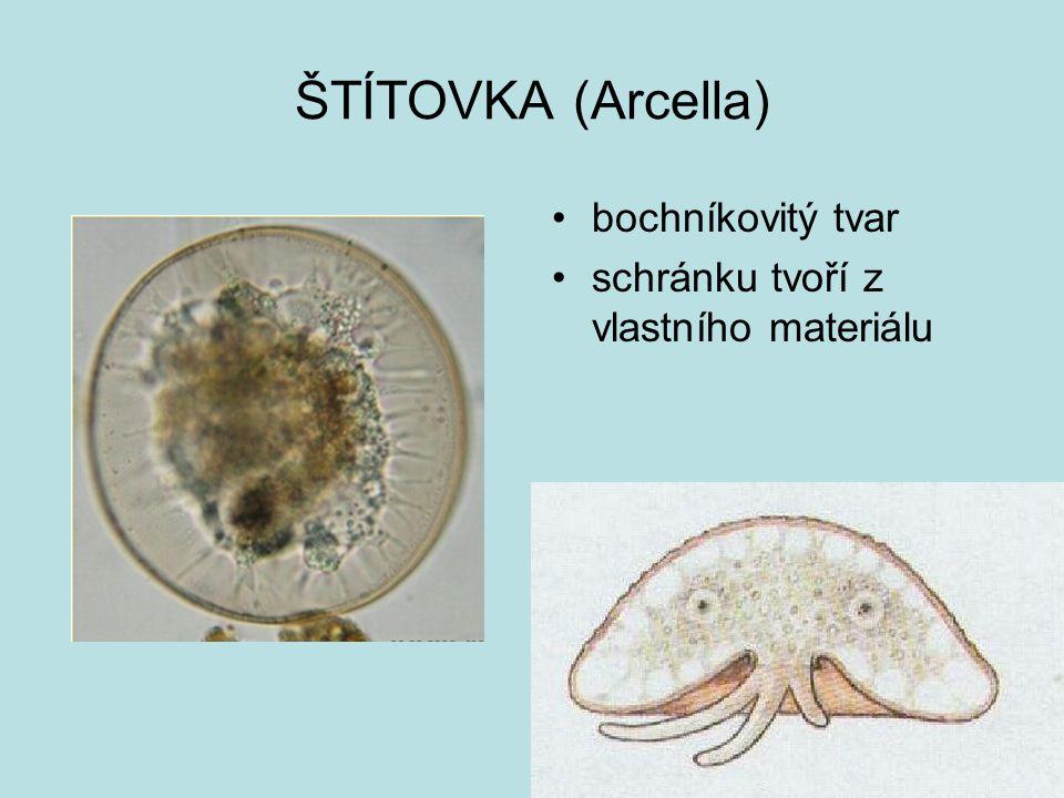 ŠTÍTOVKA (Arcella) bochníkovitý tvar schránku tvoří z vlastního materiálu