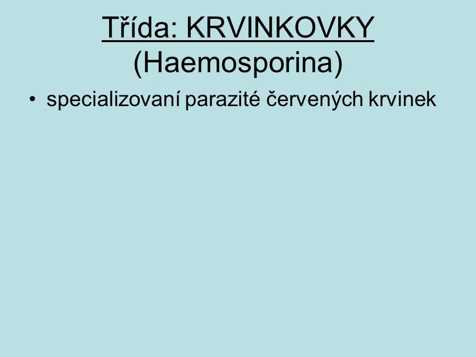Třída: KRVINKOVKY (Haemosporina) specializovaní parazité červených krvinek