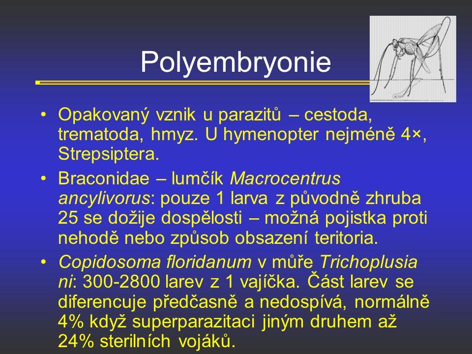 Polyembryonie Opakovaný vznik u parazitů – cestoda, trematoda, hmyz. U hymenopter nejméně 4×, Strepsiptera. Braconidae – lumčík Macrocentrus ancylivor