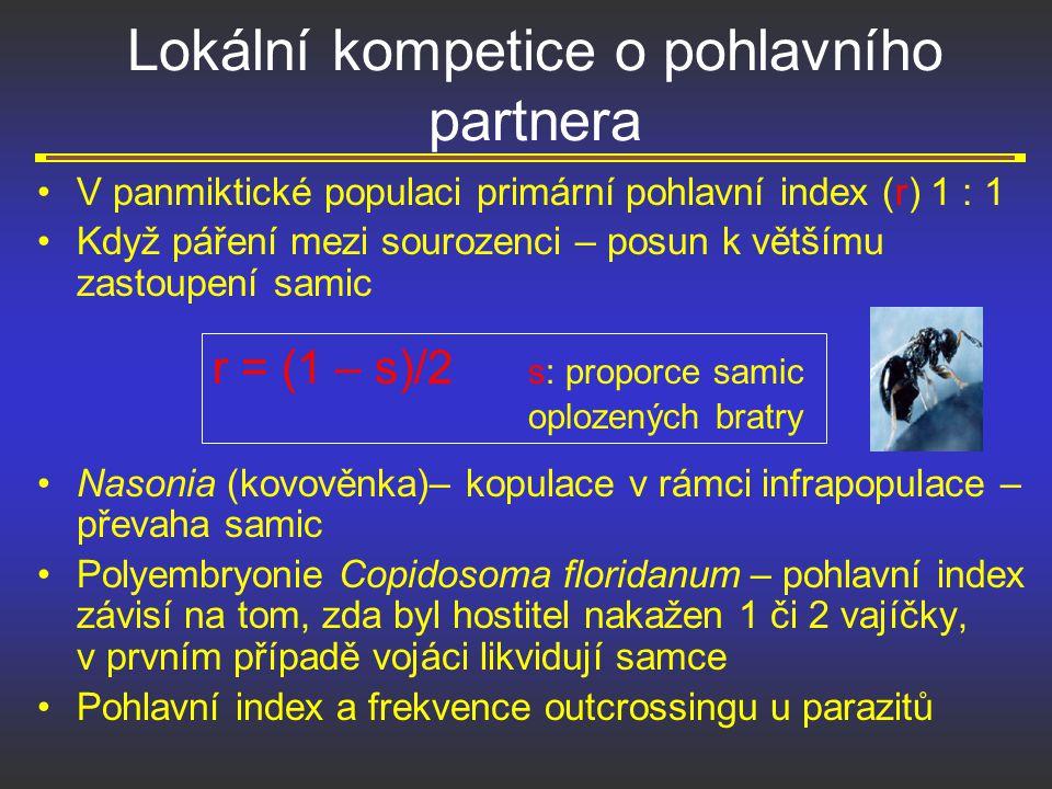 Lokální kompetice o pohlavního partnera V panmiktické populaci primární pohlavní index (r) 1 : 1 Když páření mezi sourozenci – posun k většímu zastoup