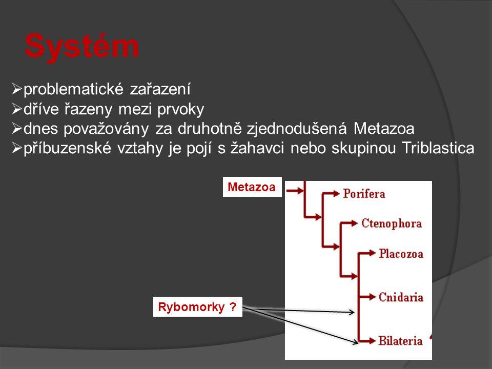 Systém  problematické zařazení  dříve řazeny mezi prvoky  dnes považovány za druhotně zjednodušená Metazoa  příbuzenské vztahy je pojí s žahavci nebo skupinou Triblastica Metazoa Rybomorky