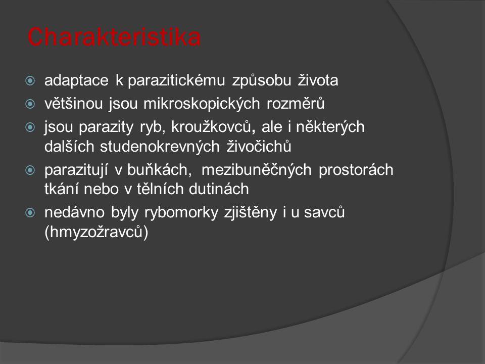 Charakteristika  adaptace k parazitickému způsobu života  většinou jsou mikroskopických rozměrů  jsou parazity ryb, kroužkovců, ale i některých dalších studenokrevných živočichů  parazitují v buňkách, mezibuněčných prostorách tkání nebo v tělních dutinách  nedávno byly rybomorky zjištěny i u savců (hmyzožravců)