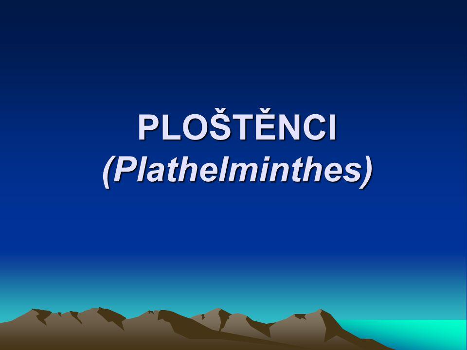PLOŠTĚNCI (Plathelminthes)