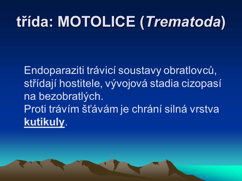 třída: MOTOLICE (Trematoda) Endoparaziti trávicí soustavy obratlovců, střídají hostitele, vývojová stadia cizopasí na bezobratlých.