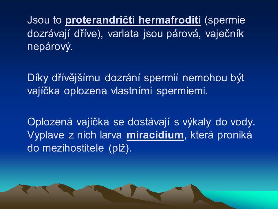 Jsou to proterandričtí hermafroditi (spermie dozrávají dříve), varlata jsou párová, vaječník nepárový. Díky dřívějšímu dozrání spermií nemohou být vaj