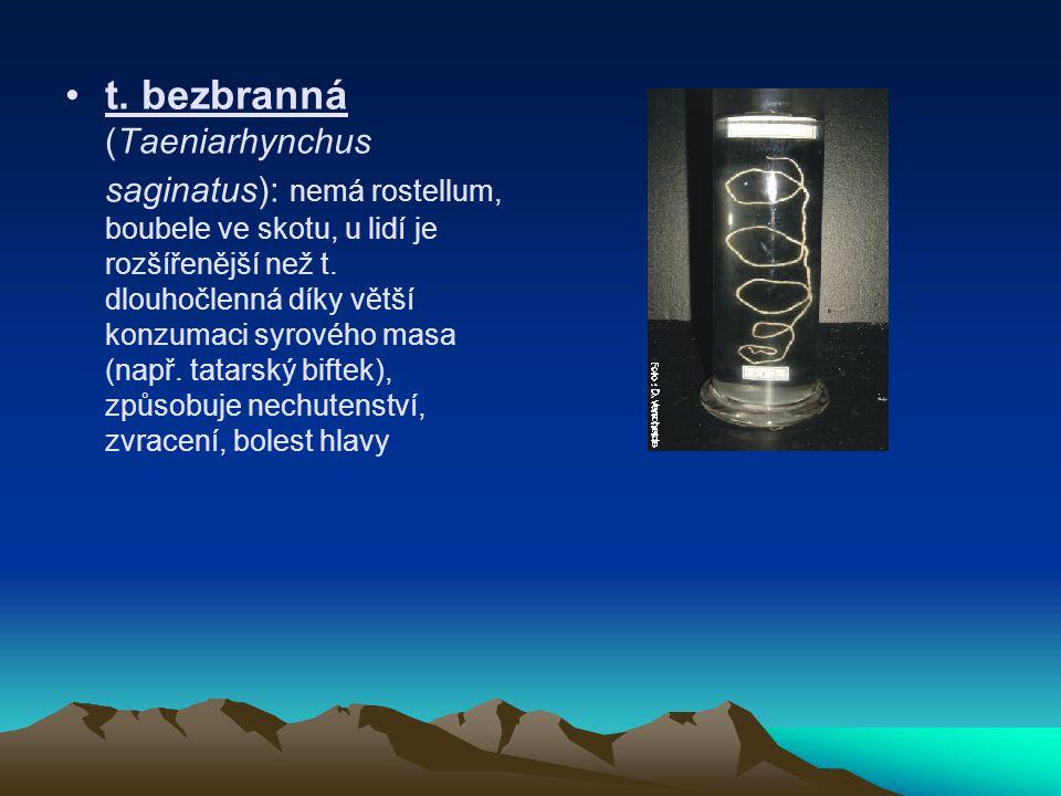 t. bezbranná (Taeniarhynchus saginatus): nemá rostellum, boubele ve skotu, u lidí je rozšířenější než t. dlouhočlenná díky větší konzumaci syrového ma