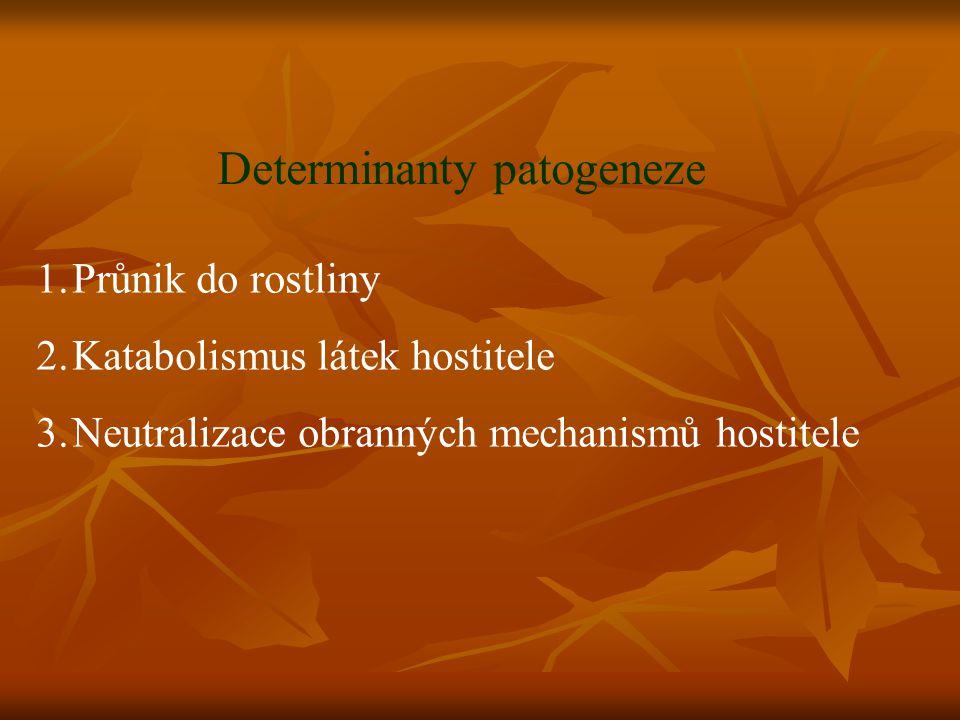 Determinanty patogeneze 1.Průnik do rostliny 2.Katabolismus látek hostitele 3.Neutralizace obranných mechanismů hostitele