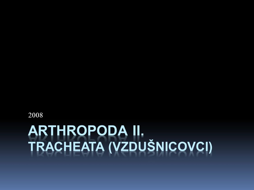 Dýchání tracheje  Na povrch těla se tracheální systém otevírá 8 - 10 párovitými průduchy (spirakula)  tím je také stanovena maximální velikost těla hmyzu (desítky cm)