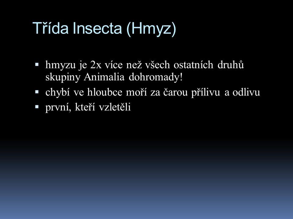 Třída Insecta (Hmyz)  hmyzu je 2x více než všech ostatních druhů skupiny Animalia dohromady!  chybí ve hloubce moří za čarou přílivu a odlivu  prvn