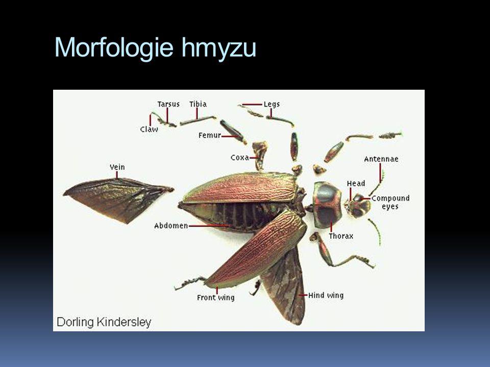 Morfologie hmyzu