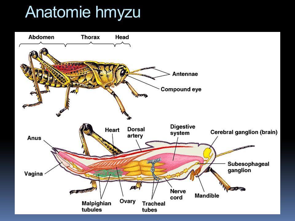 Anatomie hmyzu