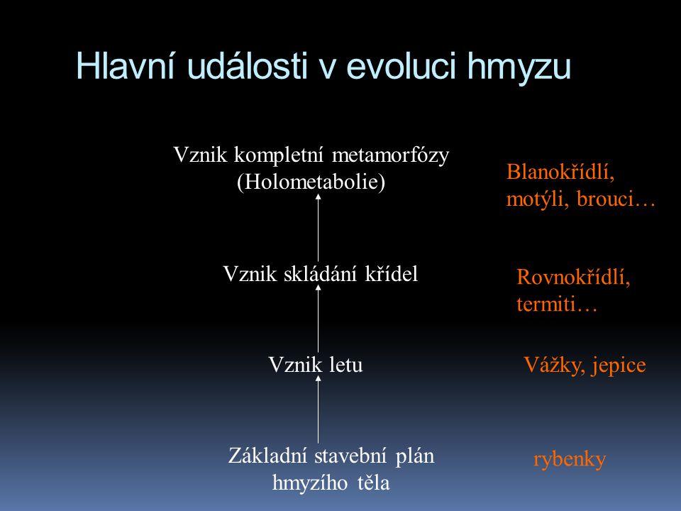 Hlavní události v evoluci hmyzu Základní stavební plán hmyzího těla Vznik letu Vznik skládání křídel Vznik kompletní metamorfózy (Holometabolie) ryben