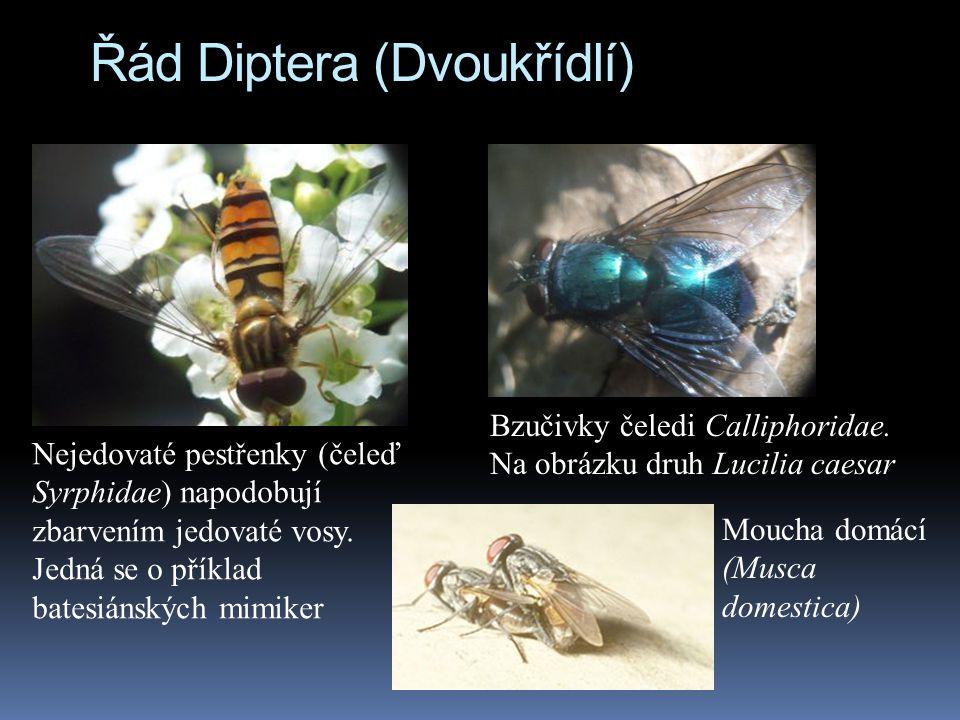 Řád Diptera (Dvoukřídlí) Nejedovaté pestřenky (čeleď Syrphidae) napodobují zbarvením jedovaté vosy. Jedná se o příklad batesiánských mimiker Bzučivky