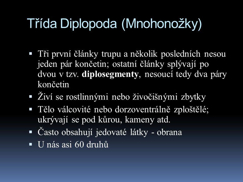 Třída Diplopoda (Mnohonožky)  Tři první články trupu a několik posledních nesou jeden pár končetin; ostatní články splývají po dvou v tzv. diplosegme