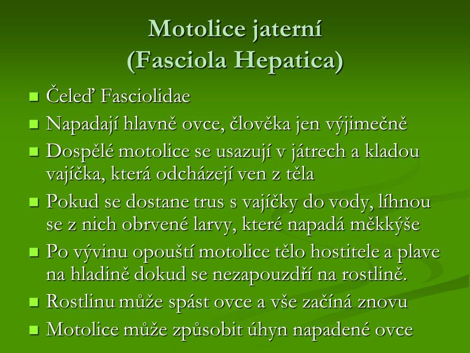 Motolice jaterní (Fasciola Hepatica) Čeleď Fasciolidae Čeleď Fasciolidae Napadají hlavně ovce, člověka jen výjimečně Napadají hlavně ovce, člověka jen