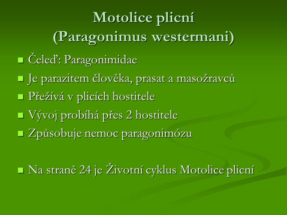 Motolice plicní (Paragonimus westermani) Čeleď: Paragonimidae Čeleď: Paragonimidae Je parazitem člověka, prasat a masožravců Je parazitem člověka, pra