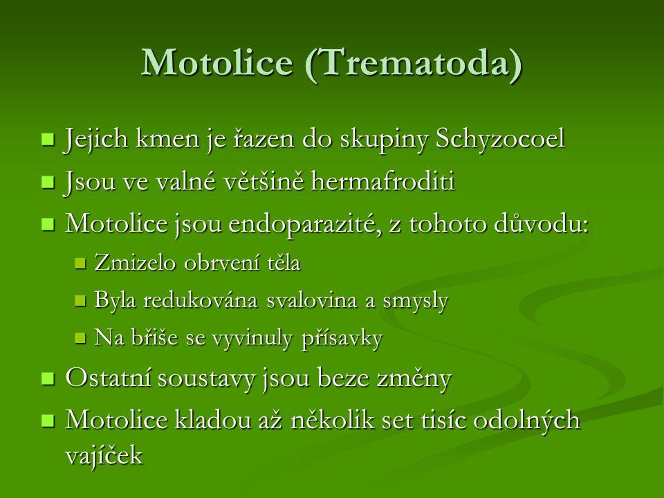 Motolice (Trematoda) Jejich kmen je řazen do skupiny Schyzocoel Jejich kmen je řazen do skupiny Schyzocoel Jsou ve valné většině hermafroditi Jsou ve