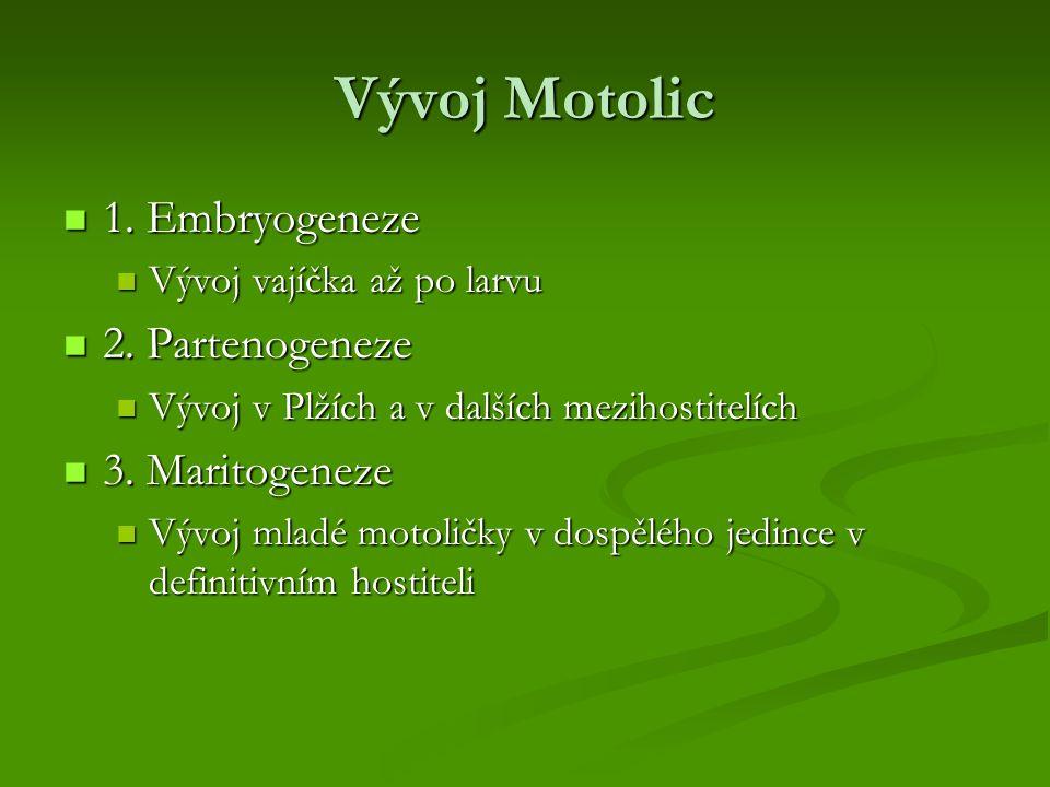 Vývoj Motolic 1. Embryogeneze 1. Embryogeneze Vývoj vajíčka až po larvu Vývoj vajíčka až po larvu 2. Partenogeneze 2. Partenogeneze Vývoj v Plžích a v