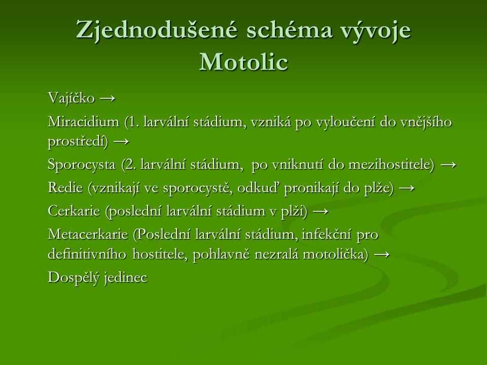 Zjednodušené schéma vývoje Motolic Vajíčko → Miracidium (1. larvální stádium, vzniká po vyloučení do vnějšího prostředí) → Sporocysta (2. larvální stá