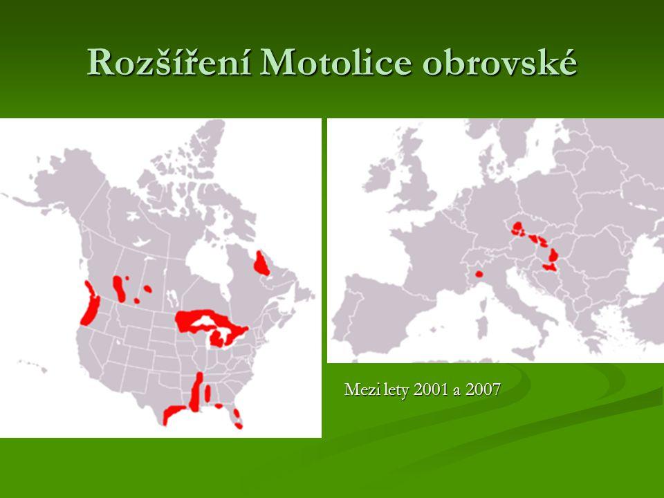 Rozšíření Motolice obrovské Mezi lety 2001 a 2007