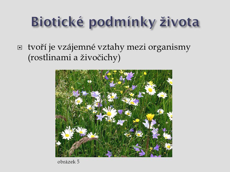 Biotické podmínky života  vzájemné vztahy mezi organismy