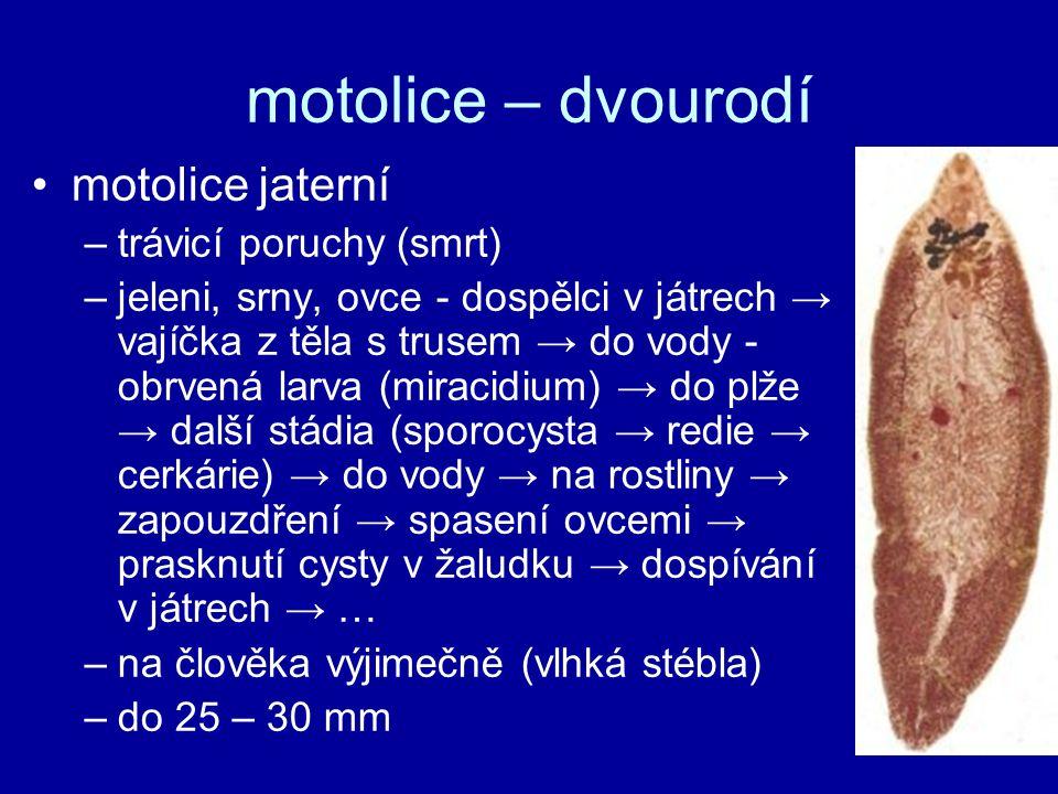 motolice jaterní –trávicí poruchy (smrt) –jeleni, srny, ovce - dospělci v játrech → vajíčka z těla s trusem → do vody - obrvená larva (miracidium) → d