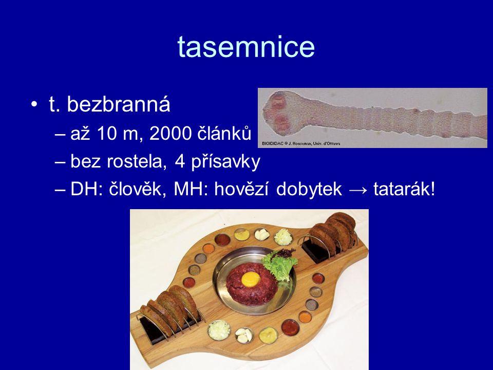 tasemnice t. bezbranná –až 10 m, 2000 článků –bez rostela, 4 přísavky –DH: člověk, MH: hovězí dobytek → tatarák!