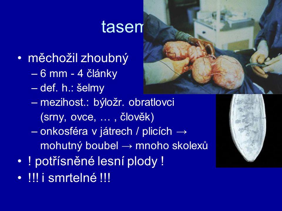 tasemnice měchožil zhoubný –6 mm - 4 články –def. h.: šelmy –mezihost.: býložr. obratlovci (srny, ovce, …, člověk) –onkosféra v játrech / plicích → mo