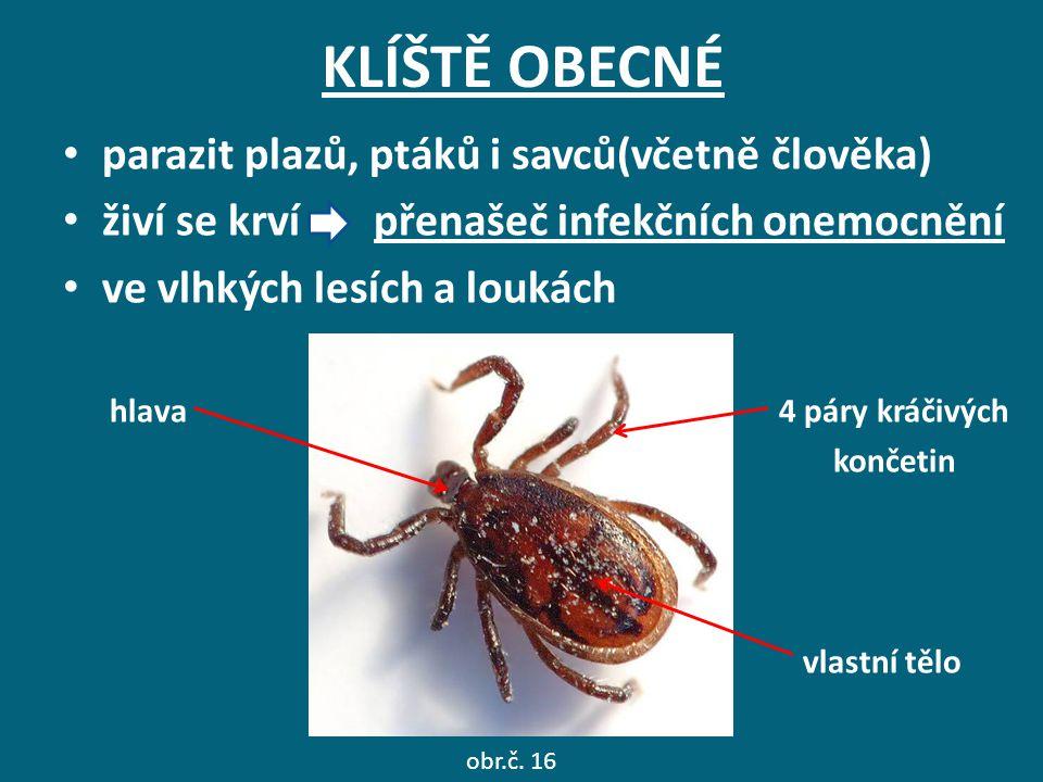 KLÍŠTĚ OBECNÉ parazit plazů, ptáků i savců(včetně člověka) živí se krví přenašeč infekčních onemocnění ve vlhkých lesích a loukách hlava 4 páry kráčiv