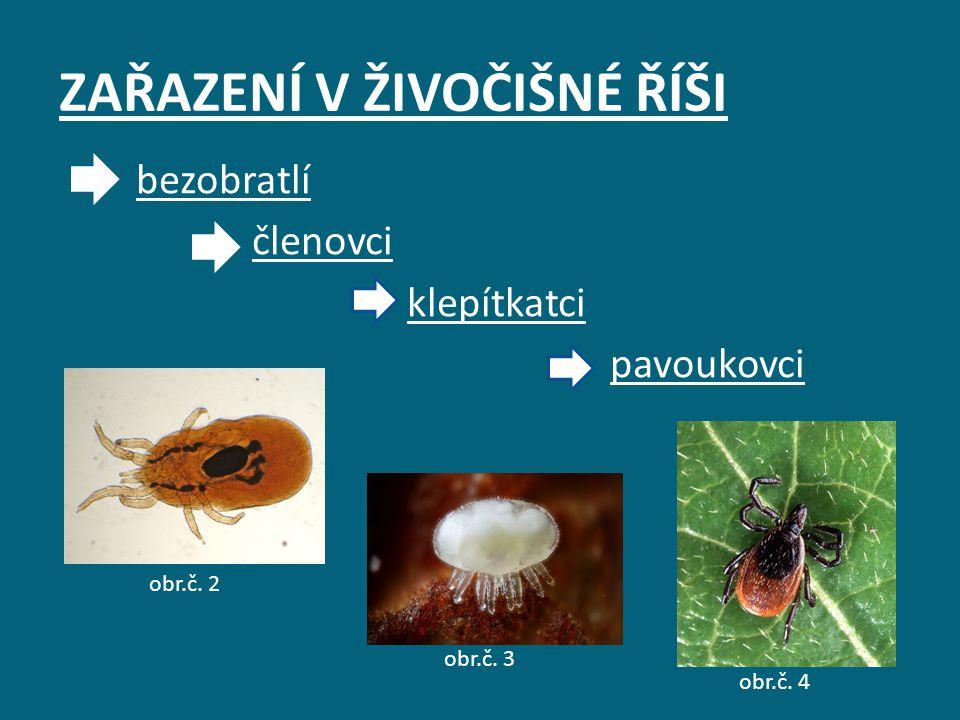 ŘEŠENÍ Častým parazitem rostlin je klepíkatec zvaný sviluška.