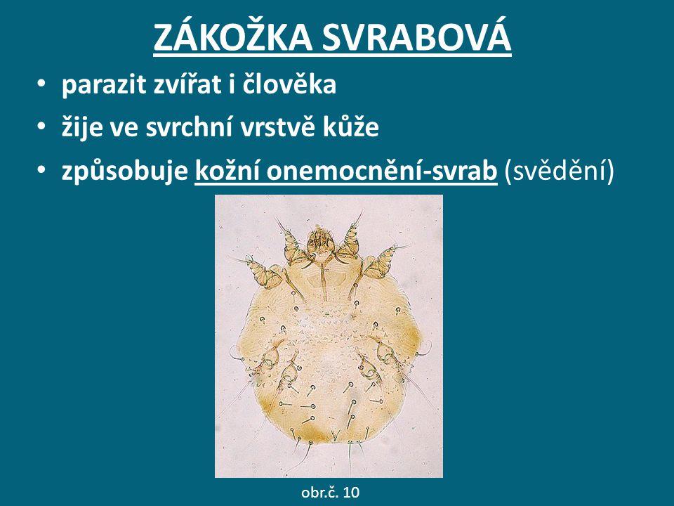 ZÁKOŽKA SVRABOVÁ parazit zvířat i člověka žije ve svrchní vrstvě kůže způsobuje kožní onemocnění-svrab (svědění) obr.č. 10