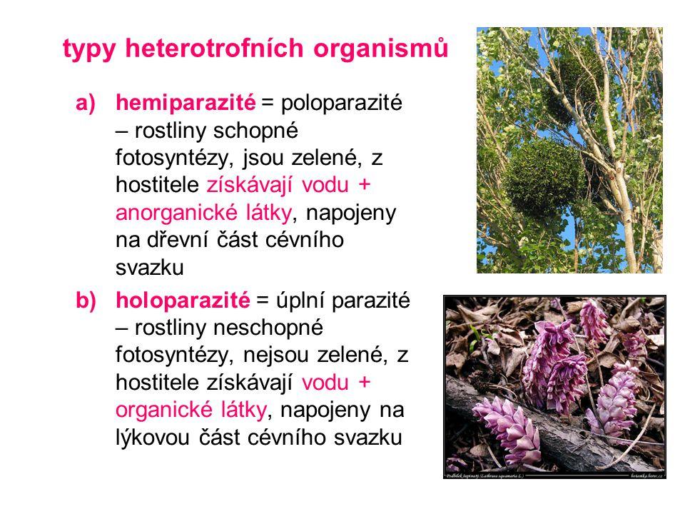 typy heterotrofních organismů a)hemiparazité = poloparazité – rostliny schopné fotosyntézy, jsou zelené, z hostitele získávají vodu + anorganické látk