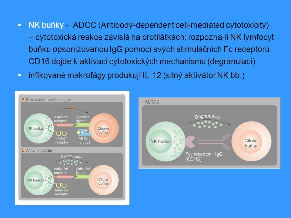  NK buňky - ADCC (Antibody-dependent cell-mediated cytotoxicity) = cytotoxická reakce závislá na protilátkách; rozpozná-li NK lymfocyt buňku opsonizo