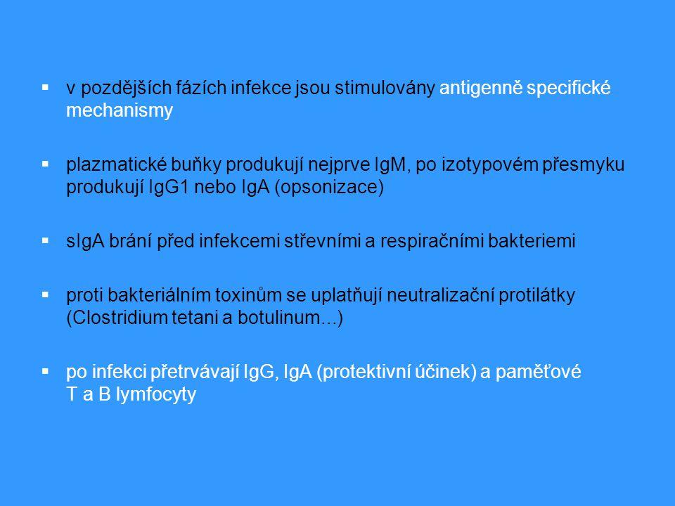  v pozdějších fázích infekce jsou stimulovány antigenně specifické mechanismy  plazmatické buňky produkují nejprve IgM, po izotypovém přesmyku produ
