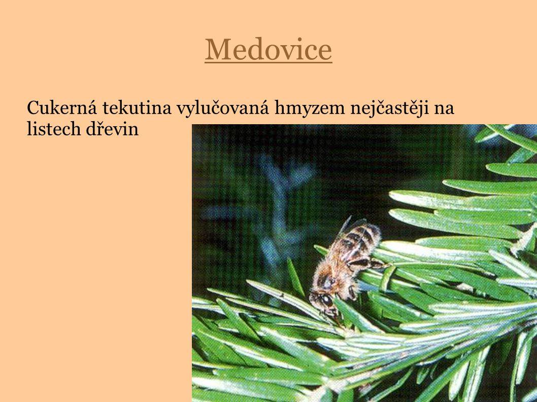 Medovice Cukerná tekutina vylučovaná hmyzem nejčastěji na listech dřevin