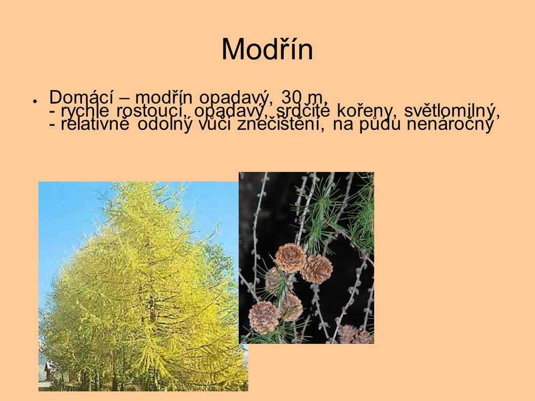Modřín ● Domácí – modřín opadavý, 30 m, - rychle rostoucí, opadavý, srdčité kořeny, světlomilný, - relativně odolný vůči znečištění, na půdu nenáročný