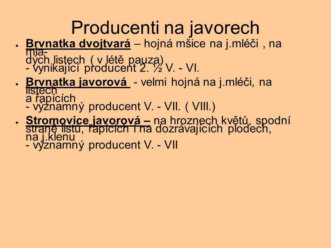 Producenti na javorech ● Brvnatka dvojtvará – hojná mšice na j.mléči, na mla- dých listech ( v létě pauza) - vynikající producent 2. ½ V. - VI. ● Brvn