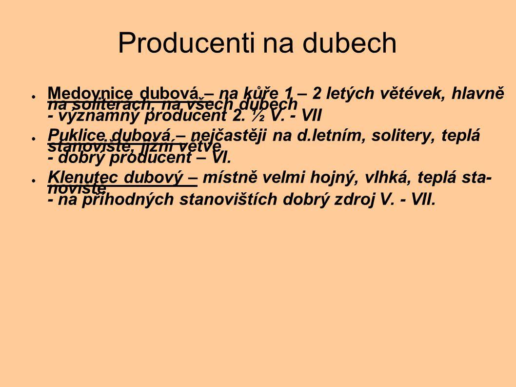 Producenti na dubech ● Medovnice dubová – na kůře 1 – 2 letých větévek, hlavně na soliterách, na všech dubech - významný producent 2. ½ V. - VII ● Puk