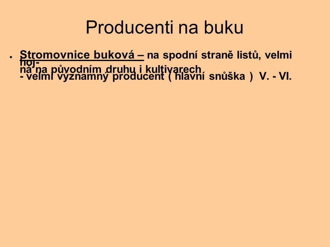 Producenti na buku ● Stromovnice buková – na spodní straně listů, velmi hoj- ná na původním druhu i kultivarech - velmi významný producent ( hlavní sn