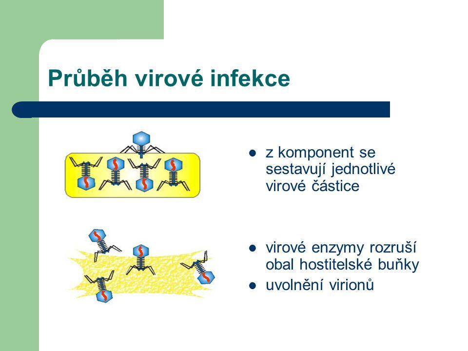 Průběh virové infekce z komponent se sestavují jednotlivé virové částice virové enzymy rozruší obal hostitelské buňky uvolnění virionů