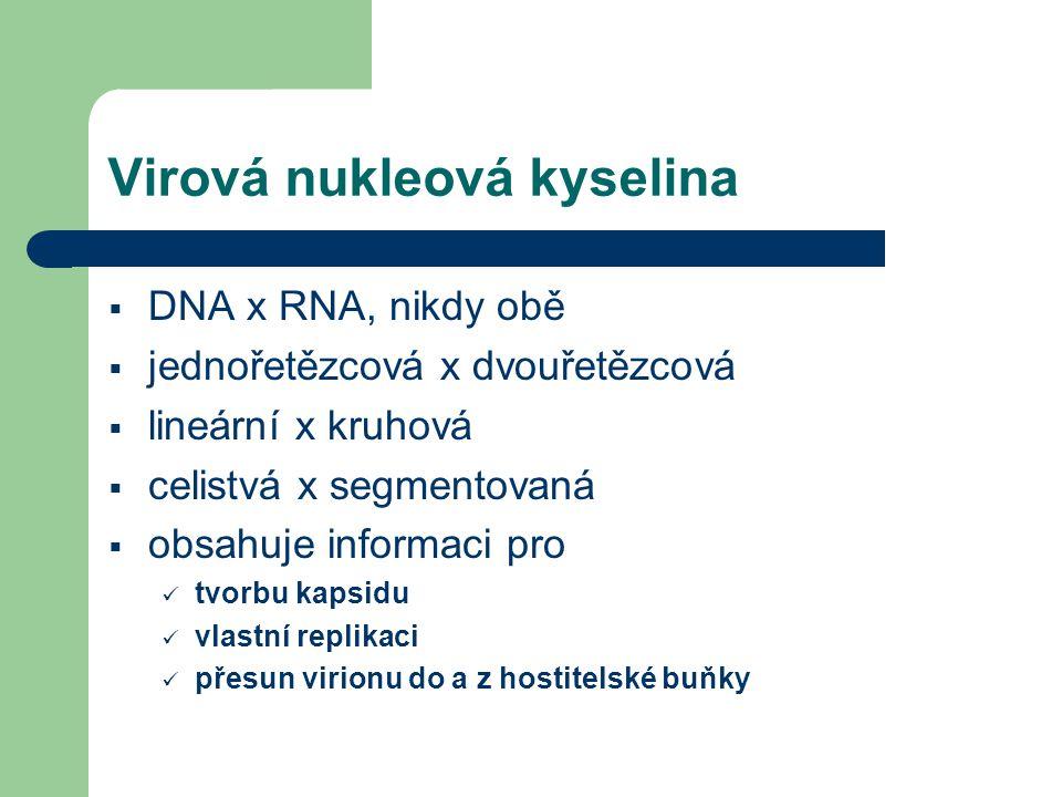 Virová nukleová kyselina  DNA x RNA, nikdy obě  jednořetězcová x dvouřetězcová  lineární x kruhová  celistvá x segmentovaná  obsahuje informaci pro tvorbu kapsidu vlastní replikaci přesun virionu do a z hostitelské buňky