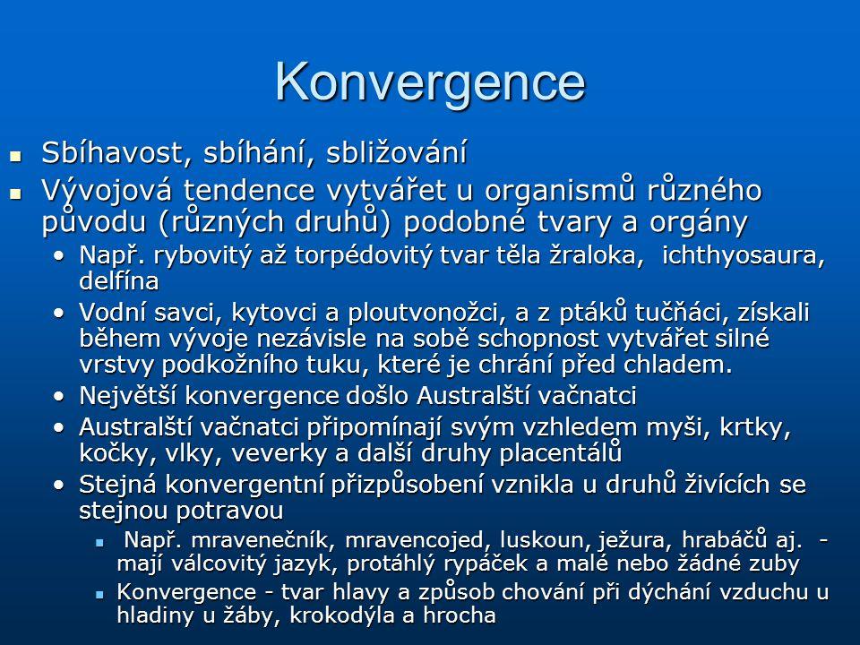 Konvergence Sbíhavost, sbíhání, sbližování Sbíhavost, sbíhání, sbližování Vývojová tendence vytvářet u organismů různého původu (různých druhů) podobn