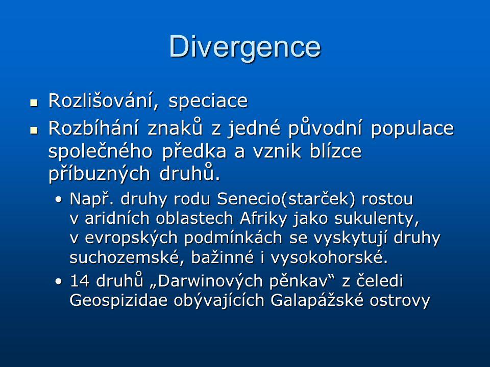 Divergence Rozlišování, speciace Rozlišování, speciace Rozbíhání znaků z jedné původní populace společného předka a vznik blízce příbuzných druhů. Roz